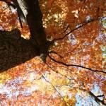 """Fall Color"" by photosbycal"
