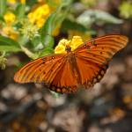 """""""Butterfly"""" by jphall"""