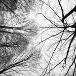 """""""Branches"""" by smedlipotski"""