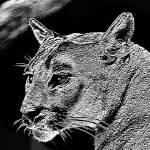 """""""Midnight Cougar"""" by Silverwolf"""