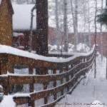 """Snow Storm, April 17, 2009"" by iThinkMedia"