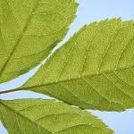 """""""Leaf"""" by bushmeister16"""
