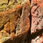 """Old Bricks"" by bushmeister16"