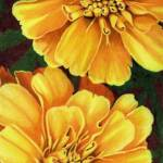 """Marigolds"" by janetpantry"