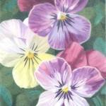 """Three Violas"" by janetpantry"