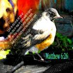 """Matthew 6:26 Robin"" by RuthPalmer"