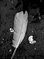 Feather © Copyright 2009 Kevin P. Johnson