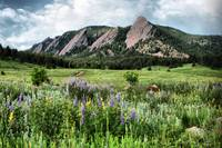 331/365 Flatirons and Wildflowers