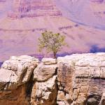 """Lone Tree on Canyon Ridge"" by lwoodburn"