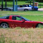 """wild corvettes in Colorado"" by lwoodburn"