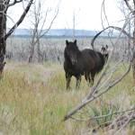 """""""wild horse in Mesa Verde"""" by lwoodburn"""