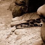 """""""Python"""" by SajjidManuel"""