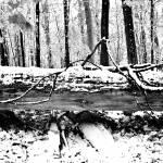 """""""Fallen"""" by jzumpetta"""