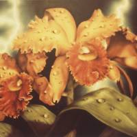 Orchid with Lightning Art Prints & Posters by Hal Stanford