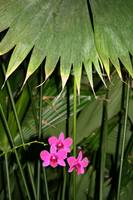 Orchid and Palm