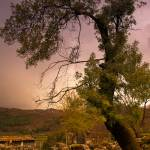 """Tree"" by rbatista"