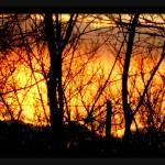 """Light My Fire"" by Jenny_Gandert"