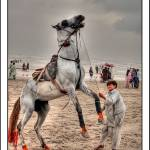 """You were a lord if you had a horse [Explored]"" by Mohsinjaffery"