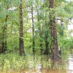"""Cathoula Swamp, Louisiana"" by iThinkMedia"