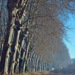 """The Plane Trees"" by ImageArt-Photography"