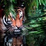 """Tiger in hiding"" by mymakeupmaven"