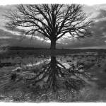 """Burr Oak Redux Monochrome 2.13.2008"" by notleyhawkins"