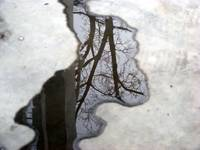 Winter Puddle