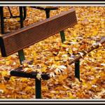 """Fall Park Bench"" by RIPizzo"