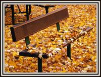 Fall Park Bench