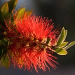 """A Blaze of Springtime color"" by smallbloc"