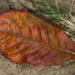 """Tropical leaf decay"" by smallbloc"