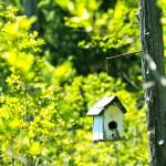 """Birdhouse At The Bog"" by mattnjohnson"