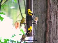 five finches