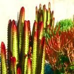 """""""Cactus Garden"""" by AmyVangsgard"""