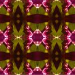 """Magenta Crystal Butterfly Pattern"" by AmyVangsgard"