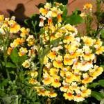 """""""yellow flowers"""" by cornelius"""