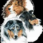 """Shetland Sheepdog Shelties Group"" by KathleenSepulveda"