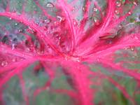 Watered leaf