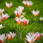 """""""April1-17"""" by aquitania"""