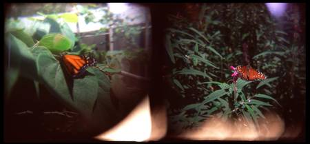 holga butterfly diptych