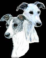 Whippet Portraits