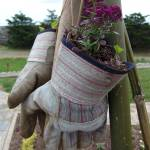 """""""garden in a glove"""" by Cathyscreations"""