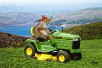 Squirrel Series Lawn Service