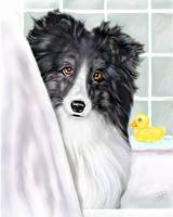 Sheltie Bath Shetland Sheepdog Bi Black