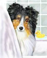 Sheltie Bath Shetland Sheepdog Tri Color