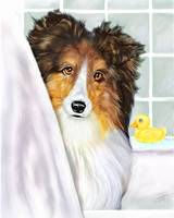 Sheltie Bath Shetland Sheepdog Sable