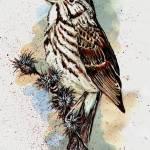 """EDM # 125 draw a bird"" by cedarraven"