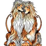"""Afghan Hound Dog Art Puppy Love"" by danesrus"