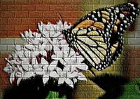 Butterfly on brick