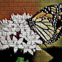 Butterfly on brick by Gary Miles